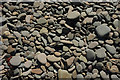 SS2004 : Pebbles, Upton Beach by Derek Harper