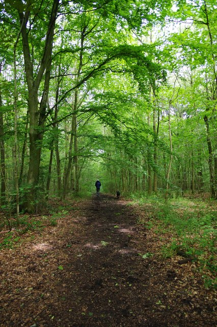 Bridleway in North Wood (part of Ockeridge Wood), near Wichenford, Worcs