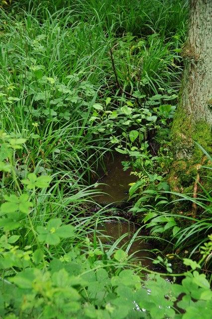 Stream in North Wood (part of Ockeridge Wood), near Wichenford, Worcs