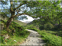 SH6251 : Watkin Path above Nantgwynant by Gareth James