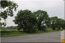TF0684 : Lincoln Road, Faldingworth by David Howard