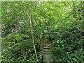 TQ3935 : Hollybush Wood, Standen by PAUL FARMER