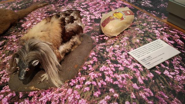 Recreation of a haggis - Kelvingrove Art Gallery and Museum