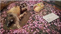 NS5666 : Recreation of a haggis - Kelvingrove Art Gallery and Museum by Julian Paren