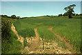 SS7427 : Oats near Bicknor Farm by Derek Harper