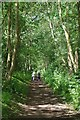 TL6621 : Walkers on the Flitch Way Near Felsted by Glyn Baker