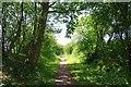 TL5921 : Cutting Approaching Little Canfield by Glyn Baker