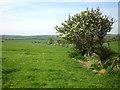 SH3391 : Footpath to Llanfair-yng-Nghornwy by Jeff Buck
