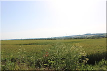 SP9064 : Field by the A509, Wollaston by David Howard