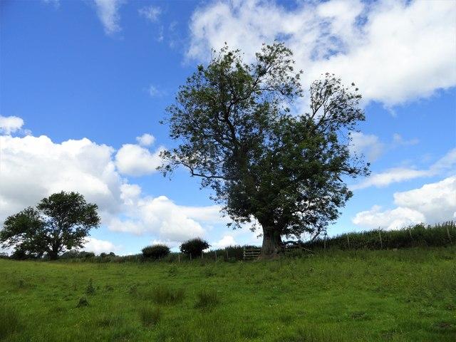 Field trees near Broad Oak Farm