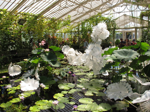 Kew Gardens water lilies with Chihuly glass artworks