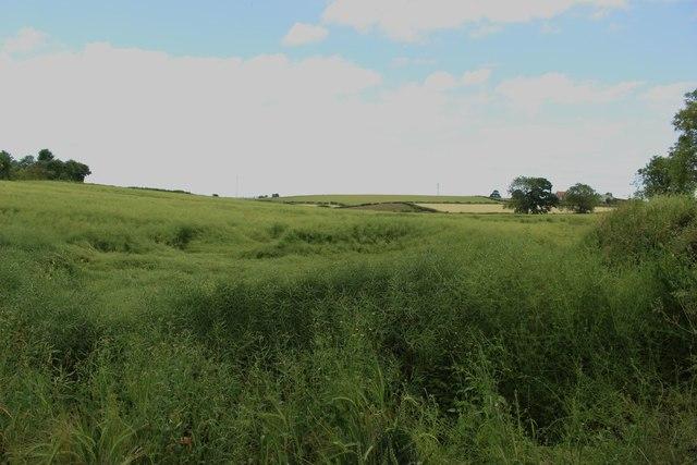 Arable field on Butterwick Road, Sedgefield
