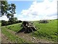 NZ1056 : Cut down tree at Broad Oak farm by Robert Graham