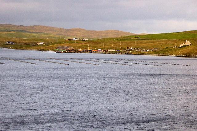 Mussel Farming at Olna Firth