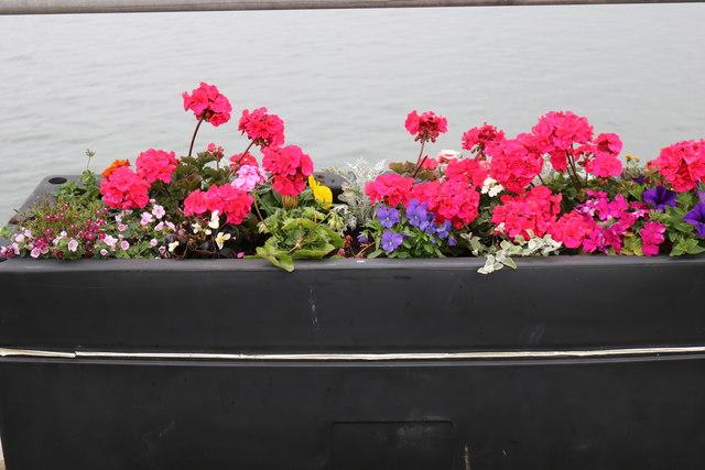 Flower Planter, Stranraer Harbour