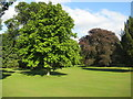 NX6054 : Cally Palace trees [1] by M J Richardson