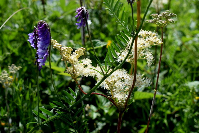 Wild plants along Lough Erne