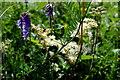 H2248 : Wild plants along Lough Erne by Kenneth  Allen