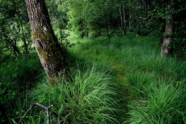 Overgrown woodland beside Fireagh Lough
