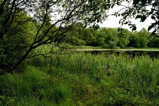 Overgrown round Fireagh Lough