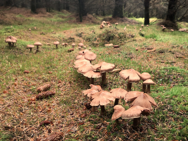 Fungi in Culbokie Wood