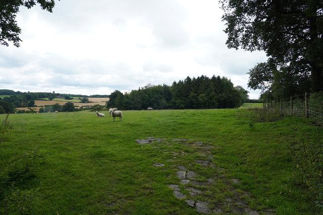 Looking Towards Thornyhill Farm