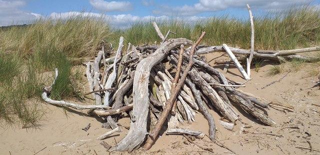Mersehead driftwood