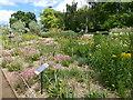 TQ3473 : The Grassland Garden at the Horniman Museum by Marathon