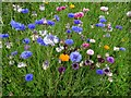 SO7743 : Wildflowers on the verge by Philip Halling