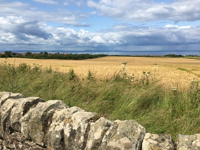 Looking across ripening corn fields in East Lothian towards Firth of Forth and Fife