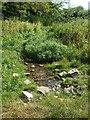 ST6538 : Spring near Evercreech by Neil Owen