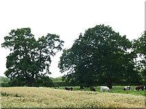 SJ7971 : Mixed farming at Bridge Farm by Stephen Craven