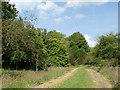 SJ7971 : Jodrell Bank arboretum - mown path by Stephen Craven