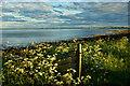 ND3460 : Sea of cow parsley by Mick Garratt