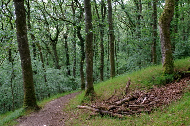 Woodland footpath above the lake