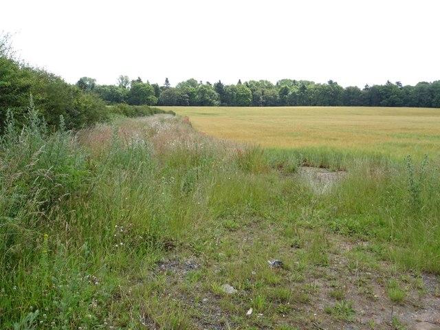 Barley field near Lizard Farm