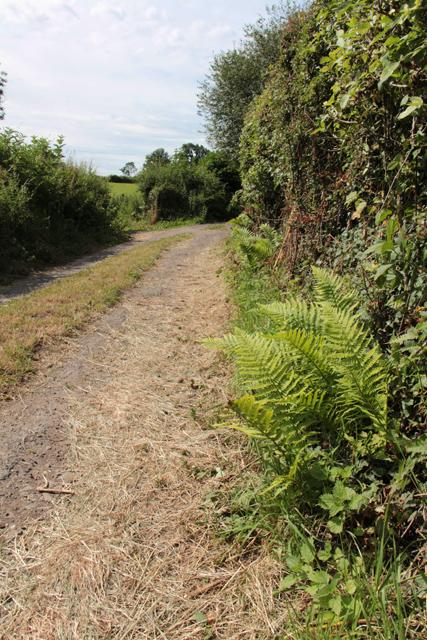A walk along Kirkgate Lane (3)