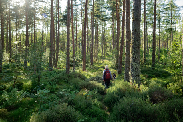 Returning from James's Temple through the woods of Drumderfit Hill