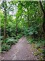 TQ8923 : Malthouse Wood by Simon Carey