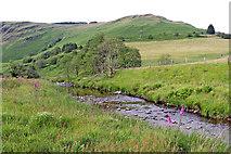 SN8056 : Afon Tywi north of Llyn Brianne in Ceredigion by Roger  Kidd