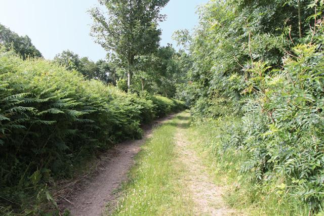 A walk along Kirkgate Lane (17)