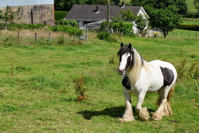 Horse, Castletown
