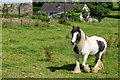 H4280 : Horse, Castletown by Kenneth  Allen