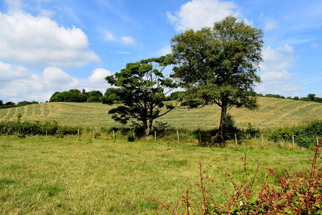 Trees, Castletown