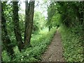 SO9600 : Towpath, Kings Reach, Thames & Severn Canal by Christine Johnstone