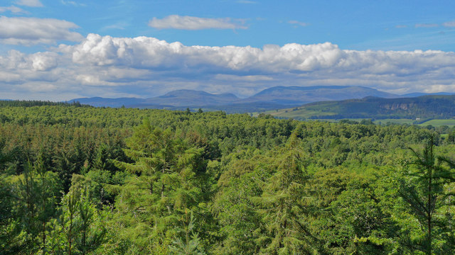 Outlook from Clash Wood towards Beinn Wyvis