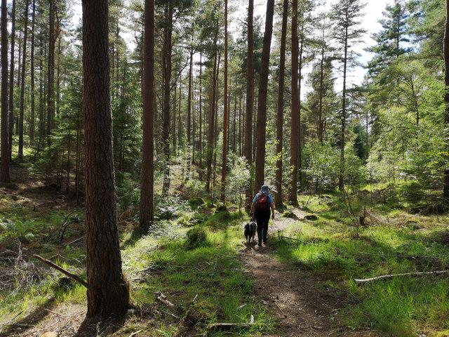 Path through Clash Wood