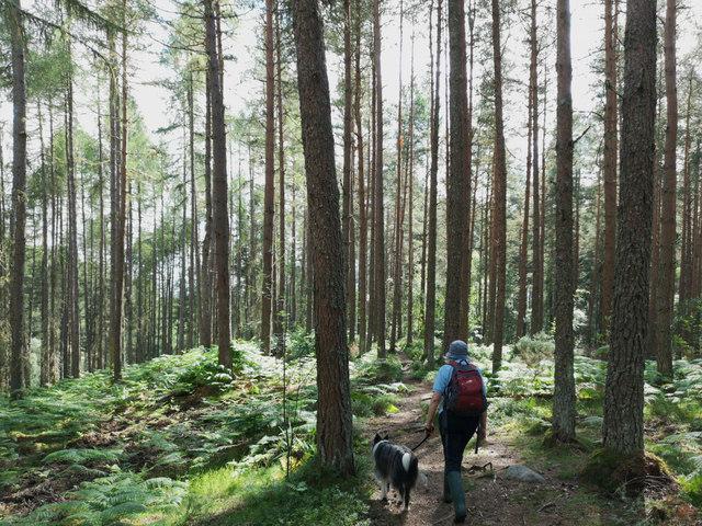 On a 1-hour dog walk in Clash Wood