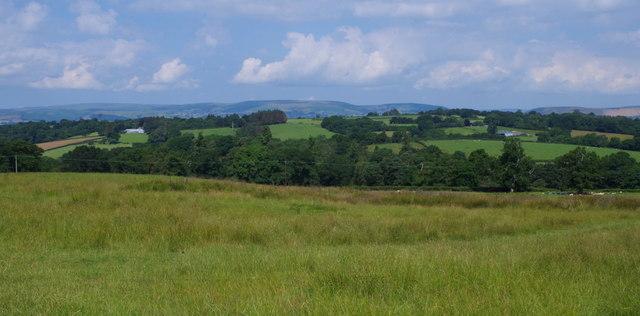 Meadow near Maesgwynne Farm