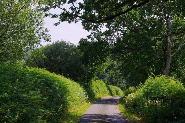 Minor lane between hedges and trees